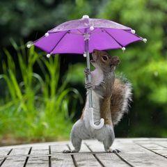Белочка, позирующая с зонтиком на фотографиях Max Ellis