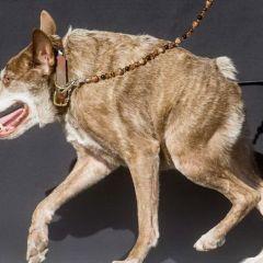 Результаты конкурса World's Ugliest Dog 2015