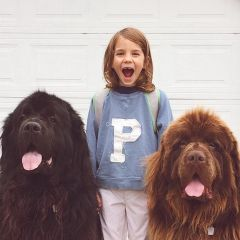 Сын, две собаки и одна лошадь