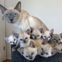 20 кошек со своими котятами