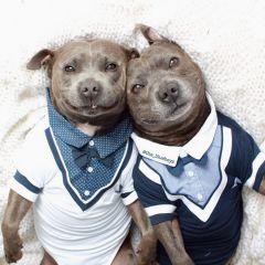 Братья-питбули Даррен и Филипп: любовь, нежность и забота