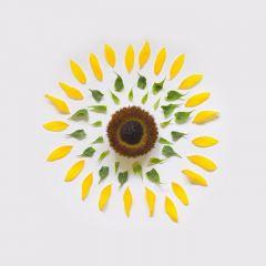 Разложенные цветы в фотографиях Fong Qi Wei