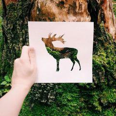 Бумажные силуэты и природное наполнение: проект Николая Толстых