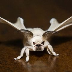 Смешные гибриды животных и насекомых