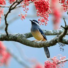 Экзотические птицы в фотографиях Sushyue Liao