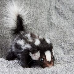 40 милых и очаровательных детенышей животных