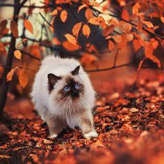 25 животных, которым нравится осень