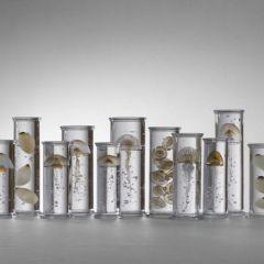 Каталог морских существ Steffen Dam