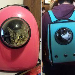 Креативные рюкзаки для перевозки кошек