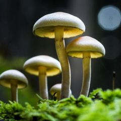 Разнообразные грибы в фотографиях Filip Eremita