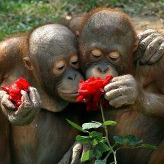 30 животных, наслаждающихся ароматом цветов