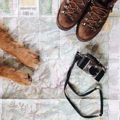 Собака-путешественница и ее хозяин-фотограф Hunter Lawrence