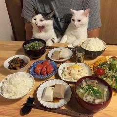 Реакция двух кошек на еду своих хозяев