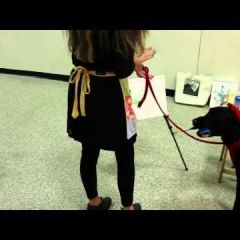 Собаковинчи: первый в мире пес-художник