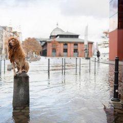 Собаколев в городе: проект Julie Marie Werner