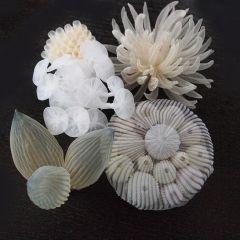 Морская бижутерия Mariko Kusumoto