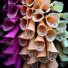 Цветы из бумаги Kate Alarcón