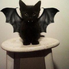15 очень страшных костюмов для кошек на Хеллоуин