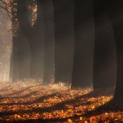 Кленовая аллея в Польше: фото Przemys?aw Kruk