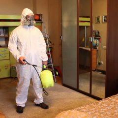 Клопы в квартире: ночной кошмар наяву