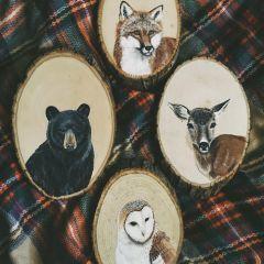 Рисунки северных животных Claudia Elise D'Orso