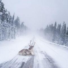 20 причин, почему Лапландия — лучшее место для празднования Нового Года