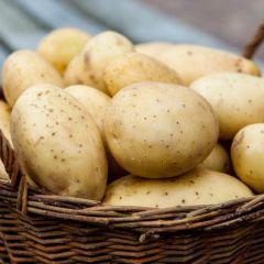 Картофелесажалки, воскотопки и другие полезные инструменты для фермера
