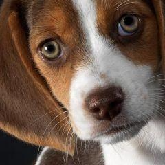 Корм Monge для собак: все лучшее псу