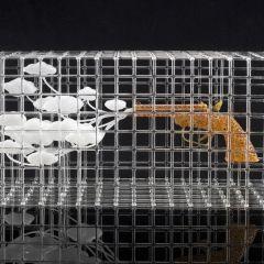 Стеклянные скульптуры Eunsuh Choi