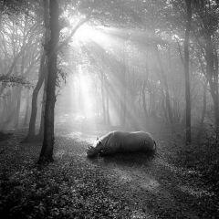 Животные в лесу: грустный проект Frank Machalowski