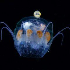 Светящийся планктон на фотографиях Ryo Minemizu