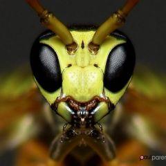 Завораживающие насекомые в фотографиях Paul Parent