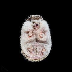 Животные: вид снизу. Фото Andrius Burba