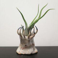 Странная керамика Gregory Knopp