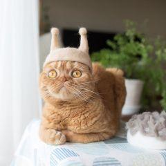 Кошки с целым гардеробом головных уборов