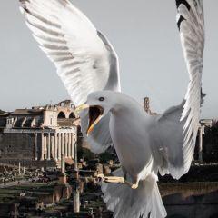 Птицы Рима в снимках Skander Khlif