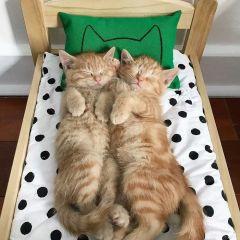 Кроватки IKEA для котов и кошек