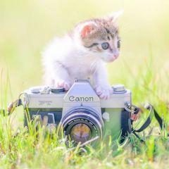 Котята и фотокамеры: снимки Ryosuke Miyoshi